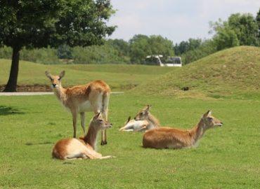 Parc African Safari