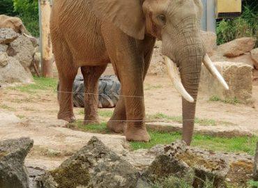 Zoo d'Amnéville