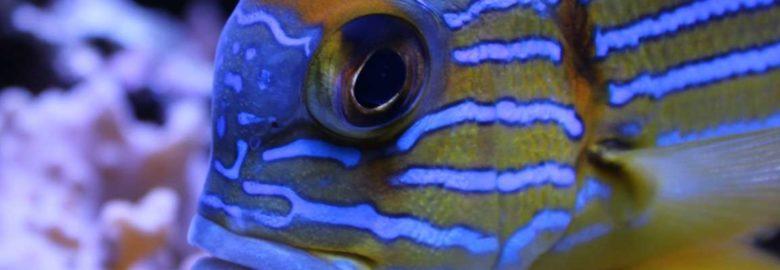 Aquarium de Dunkerque